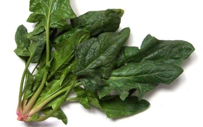 cum se plantează spanacul