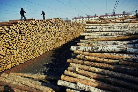 hoții de lemne