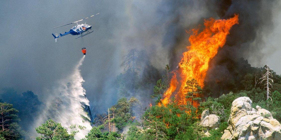 incendii forestiere