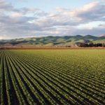 anm culturi agricole