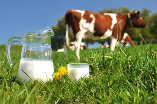 laptele românesc