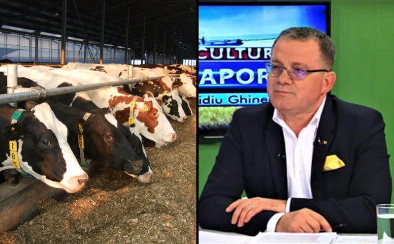 Ordin vaci subvenția ANT bovine crescătorii de bovine