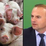 Scarlat boala pestei porcine