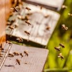 noua PAC apicultori