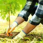 plantare copaci