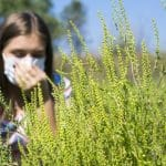 alergie la ambrozie