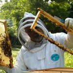 legea apiculturii