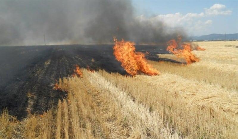 APIA: Arderea miristilor si a resturilor vegetale pe teren arabil,  INTERZISA - AGROTV