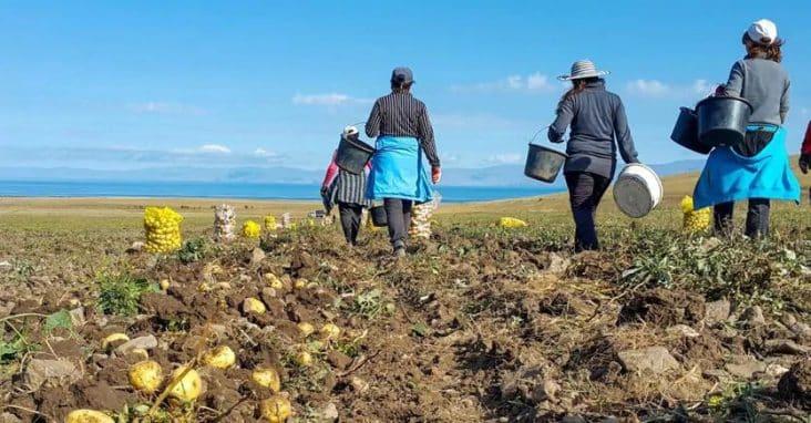 Cifrele dezastrului din agricultură! Numărul de muncitori s-a redus drastic
