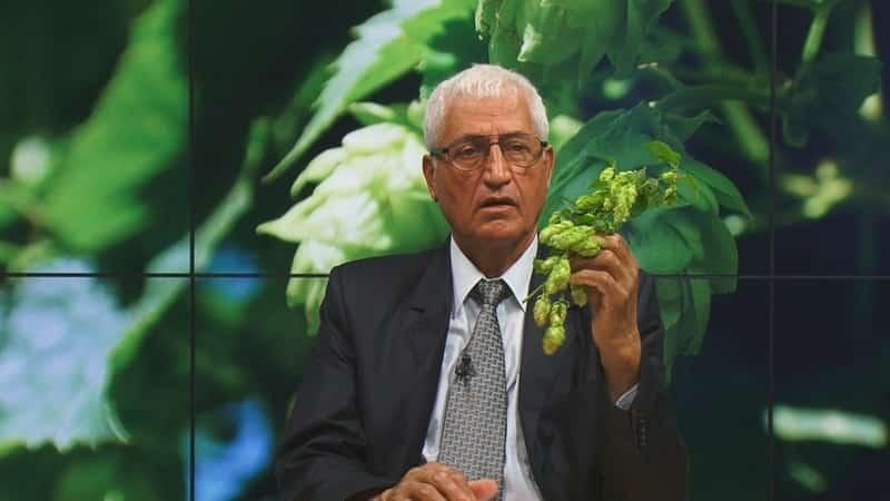 FARMACIA VERDE – Hameiul, planta care te scapa de insomnii