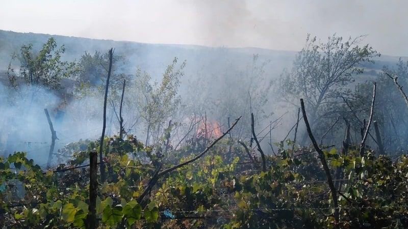 Incendiile de vegetație se țin lanț! Zeci de hectare au fost arse, iar o femeie a fost rănită