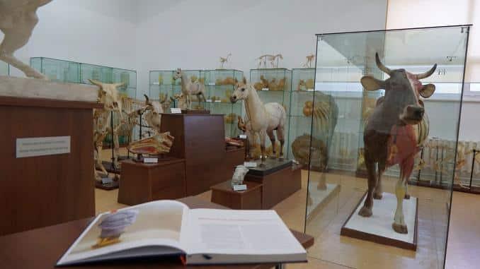 Muzeul de anatomie al USAMV Iași a fost redeschis