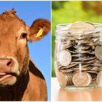 animale subvenții vaci de carne subvenția SCZ ferma de vaci crescatorii de bovine APIA