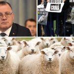 interzicerea exportului de animale vii
