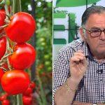 cum tratam tomatele din solar boala petelor de bronz la tomatetuta absoluta horia ghibu tratament pentru legume în sere și solarii fungicidele la culturile de legume melcii care ataca rosiile dupa cat timp putem recolta tratamente pentru tomate in spatii protejate cu ce putem sa stropim rosiile cu ce trebuie sa stropim tomatele productii mai bune toti fermierii trebuie sa stie