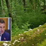 Strategia forestieră a UE