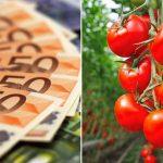 subvenții legume sprijin legume in spatii protejate
