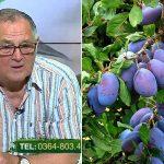 cum tratam pomii fructiferi bolile pomilor fructiferi