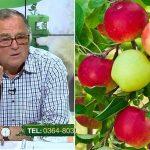 cum tratam bolile la pomii fructiferi