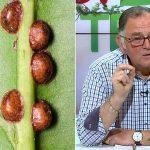 cum protejam plantele de paduchii testosi