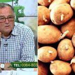 cum prevenim incoltirea cartofilor