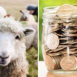 subventiile la ovine