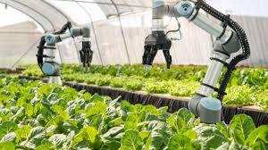 Pot culege, pot iriga și pot lucra...cot la cot cu fermierul! Roboții agricoli nu mai sunt astăzi o imagine dintr-un film SF Un concern maghiar format din trei companii a făcut următorul pas spre eficientizarea culturilor hidroponice.
