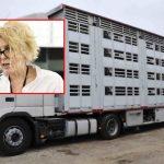 interzicerea transportului de animale vii