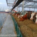 fermă plutitoare